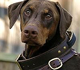 imagem do cão